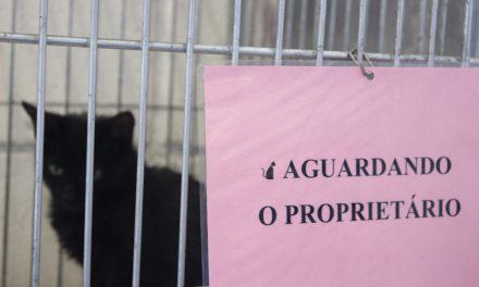 Um sábado de festa para a adoção de cães e gatos