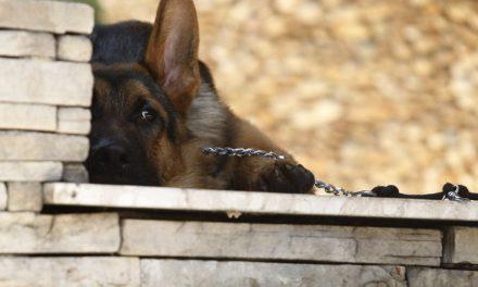 Restaurante coloca cão de guarda na porta