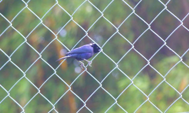 Quais são as regras para fotografar passarinhos nos parques municipais?