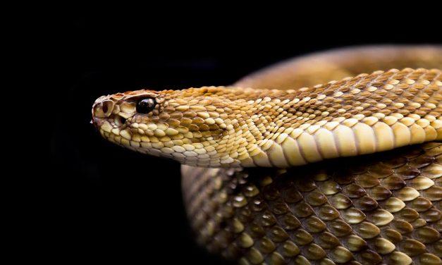 A difícil tarefa de fotografar as principais serpentes da cidade