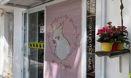 Primeira loja do Brasil especializada em acessórios para Calopsitas